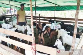 Terjadi kenaikan harga hewan kurban di Pontianak