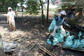Tumpahan minyak ancam kehidupan 300 ribu bakau Bekasi