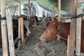 DPKP Ambon siapkan petugas periksa hewan kurban di masjid