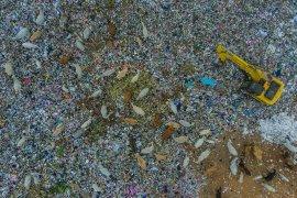 Hewan Kurban Pemakan Sampah