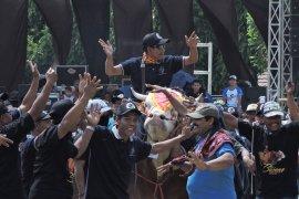 Populasi ternak sapi Situbondo tertinggi di Jawa Timur