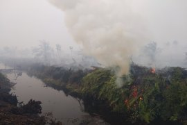 Kebakaran lahan gambut di Desa Sipin Teluk Duren, Muarojambi (video)