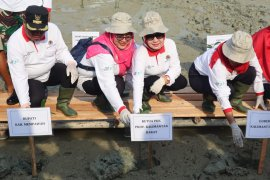 PKK Kalbar tanam mangrove jaga lingkungan