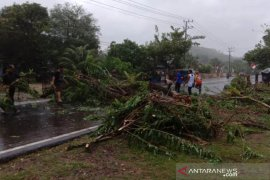 Angin kencang terbangkan atap rumah dan pohon bertumbangan di Aceh Jaya