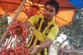 Jelang Idul Adha harga cabai di Cilegon Rp120 .000 /Kg