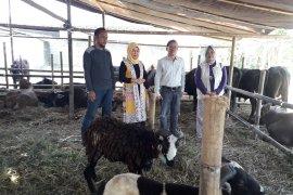 Distan Banten pantau 17 lokasi pemotongan hewan kurban,  pastikan kesehatan hewan