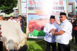 Gubernur Maluku serahkan sapi kurban bantuan Presiden Jokowi