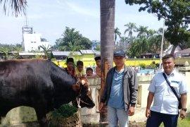 Gubernur Sumut serahkan delapan ekor hewan kurban untuk beberapa masjid di Langkat