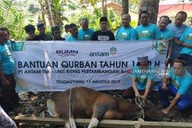 Antam salurkan lima ekor sapi kurban pada Lebaran Idul Adha