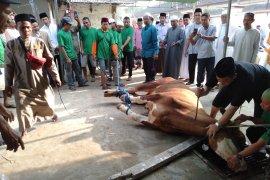 Bupati Karawang pastikan seluruh hewan kurban yang disembelih kondisinya sehat