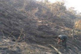 Kebakaran puncak Gunung Ciremai hanguskan lebih 343 hektare