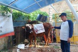 Berbagi kebahagian di Idul Adha, Bank Banten kurban dua ekor sapi untuk masyarakat Banten