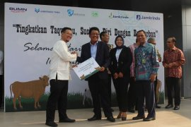 PT. Penjaminan Jamkrindo Syariah salurkan 16 ekor sapi qurban pada Idul Adha 1440 H