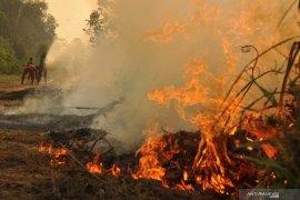 HLG Londrang terbakar akibat sekitarnya dijadikan areal konsesi