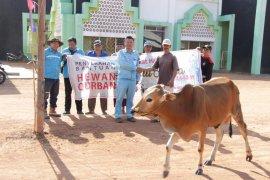 PT WHW AR Sumbang puluhan hewan kurban ke masyarakat Kendawangan Ketapang