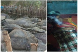 Pengembala tewas disambar petir bersama 19 ekor kerbaunya