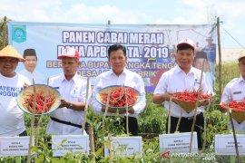 Pemkab Bangka Tengah dorong petani budidayakan tanaman cabai