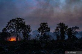 Senin, terdeteksi 358 titik panas merubung Sumatera