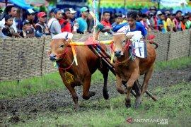 Bangkalan alokasikan Rp1,6 miliar benahi arena karapan sapi Piala Presiden