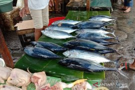 Harga ikan cakalang segar di Ambon masih mahal