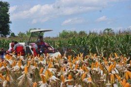 Fadel: produksi dan kualitas jagung Indonesia tidak kalah bersaing