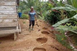 Belasan gajah liar masih berkeliaran di permukiman warga di Nagan Raya