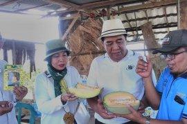 Ketua DPRD panen melon di Sungai Ulin