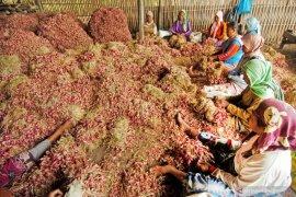 Harga bawang di Piru stabil