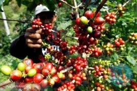Indonesia ekspor kopi senilai satu juta Euro ke Slowakia