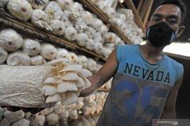 Peneliti UI temukan program inovatif mikroponik untuk jamur tiram