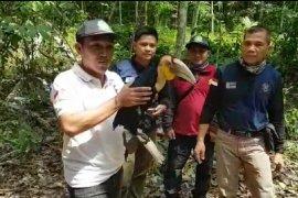 KPH Tabalong selamatkan  burung langka Julang Emas