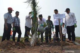 Palmina-Kencana Makmur tanam kelapa sawit di Jejangkit