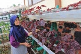 Latih motorik, lansia Tangerang diberikan kesenian bermain angklung latih motorik