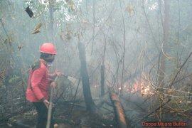 70 hektare kawasan Tahura Sultan Thaha  terbakar