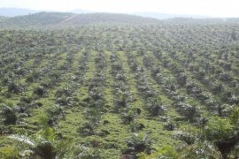 Komisi AKRS verifikasi RSUD Pulau Obi
