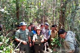 PT.NSHE dukung kegiatan BBKSDA Sumut patroli jerat di hutan SD Hole