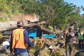 Di Sulawesi Utara, dua kendaraan tertimpa pohon