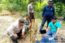 BKSDA datangkan pawang ke Aceh Selatan atasi gangguan  harimau