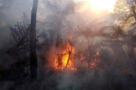 Luas kebakaran hutan Gunung Slamet capai 14,3 hektare