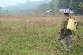 Petani Kaltara bantah bakar lahan, mereka semprotkan racun rumput