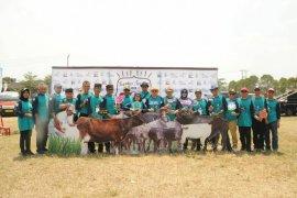 Menjadi sentra kerbau terbaik se-Indonesia, Lebak siap menjadi lumbung ternak.