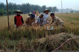 Dinas Pertanian Landak panen padi demplot varietas unggul bersertifikat