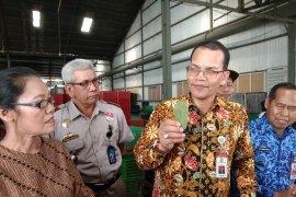 Kepala Barantan lepas ekspor 4,02 ton daun Gulinggang ke Jepang