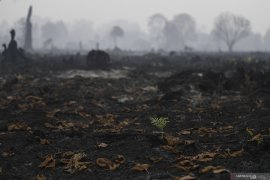 LIPI: Degradasi hutan ancam kelestarian spesies endemik