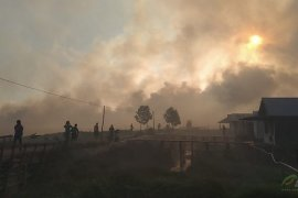 14 companies named as suspects in forest fires
