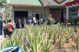 Pemkab Gunung Kidul memberi pelatihan pengolahan aloevera