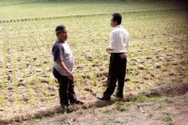 20 hektare sawah di Mukomuko kekeringan