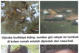 Kijing, Sumber Protein Page 1 Small
