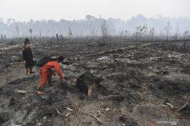 328.724 hektare hutan-lahan yang terbakar selama Januari sampai Agustus 2019