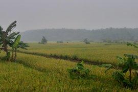 Opini : Tanah subur dan kesejahteraan petani Kalimantan Barat
